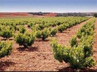 Nuestras viñas