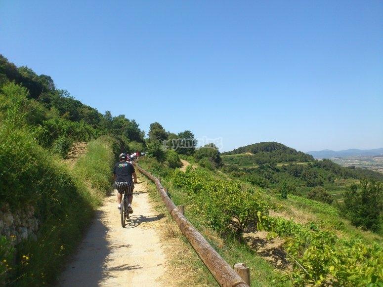 前往Penedés葡萄园