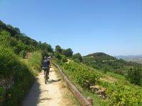 Ruta enoturística en BTT por viñedos del Penedès