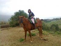 Paseo a caballo en los Alcornocales