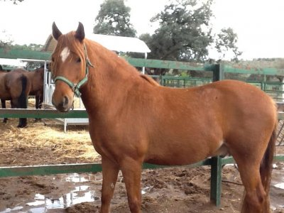 Iniziazione con pony speciali Bambini, Brunete