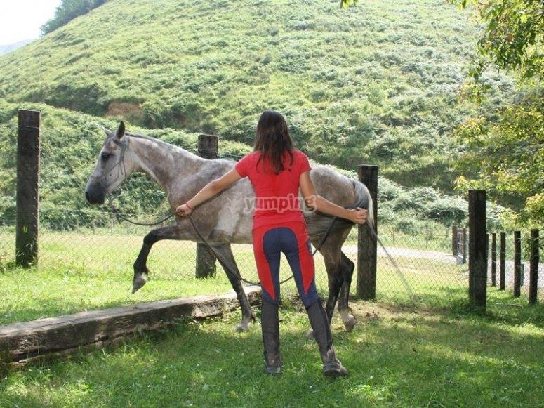 草地上的一匹马
