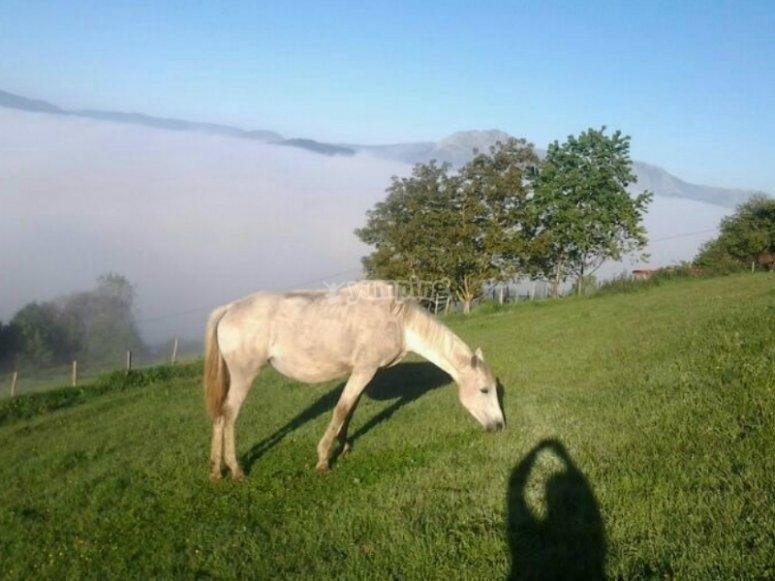 Uno de los caballos en el prado