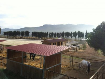 8h 7-day Horse riding camp, Christmas, Olerdola