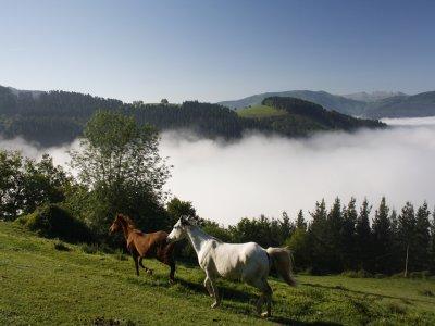 Bono 10 clases de equitación en Lastur