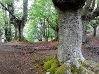 在树林间散步