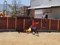 Pillado por la vaquilla en Granada