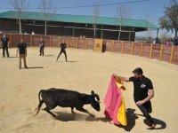 Toreando a la vaquilla en Granada
