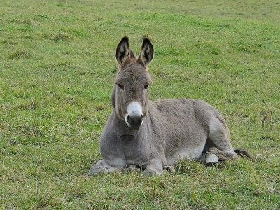 1-Hour Donkey Ride in Santa Susana