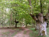 在树林中踩踏
