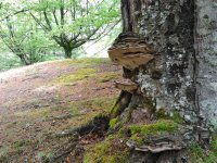 树木性质徒步旅行中间行走