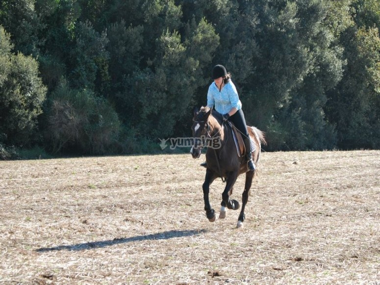 Discounts for horse riding courses