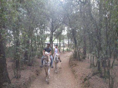 Christmas offer: horseback ride course+free tour