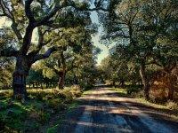 Camino entre grandes arboles
