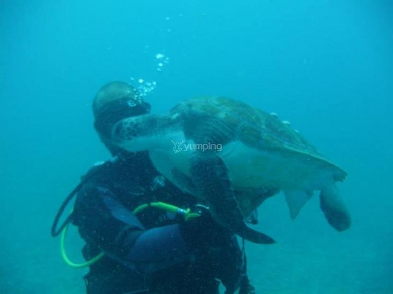 Inmersiones con tortugas