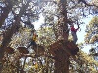 Juegos entre árboles