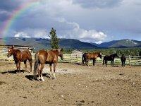 caballos en el prado descansando