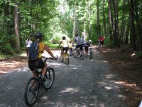 Cycling through the forest paths