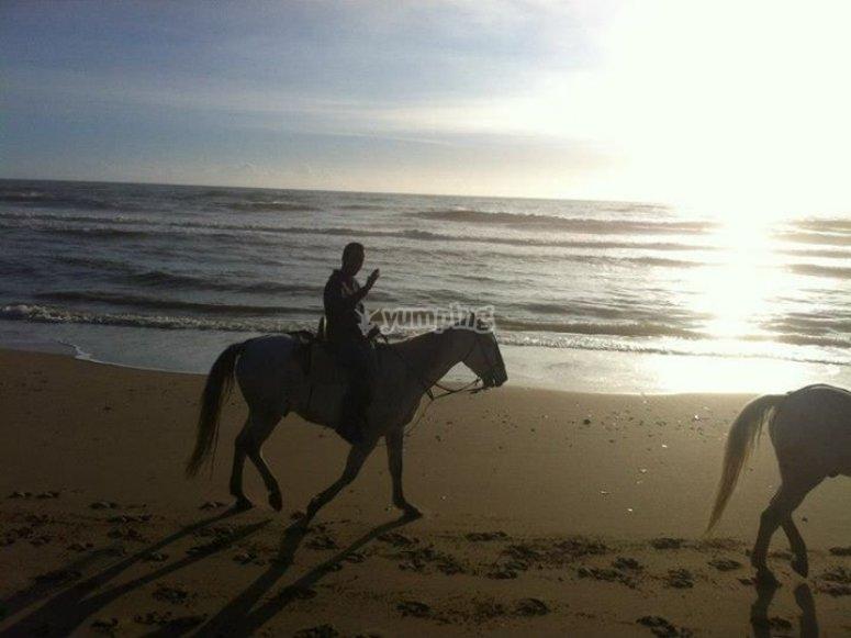 Excursión a caballo Doñana