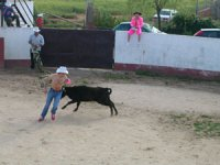 Bullfighting the heifer