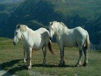 Animales en estado salvaje Andorra