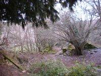 campo natural