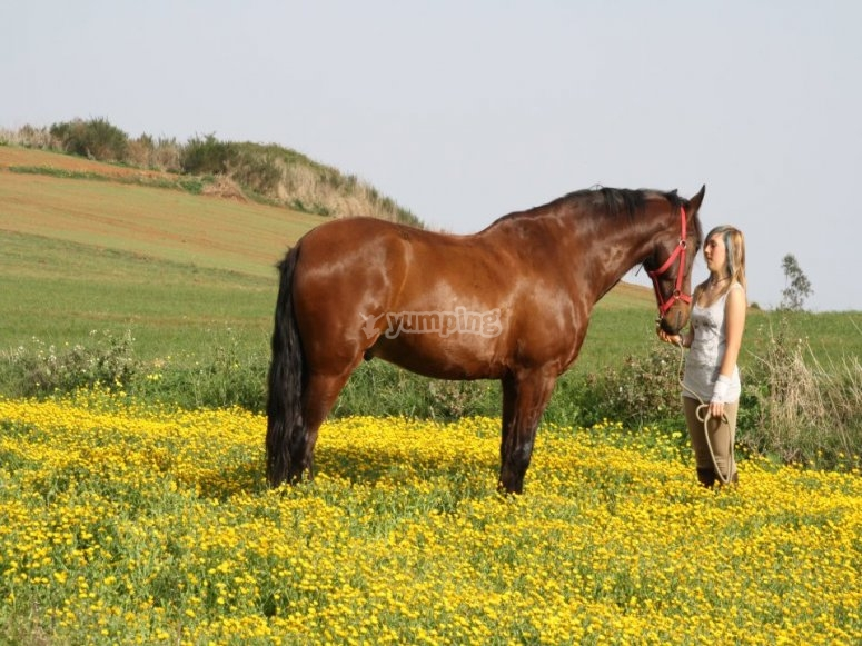 With the horse in the field