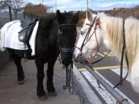 Pony ride for kids, 30 min