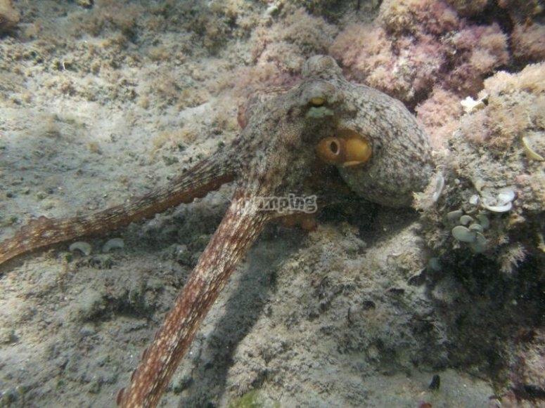 Descubre los habitantes marinos