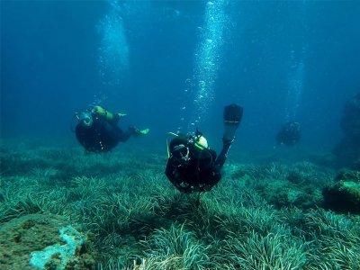 在Isla Tabarca潜水5小时