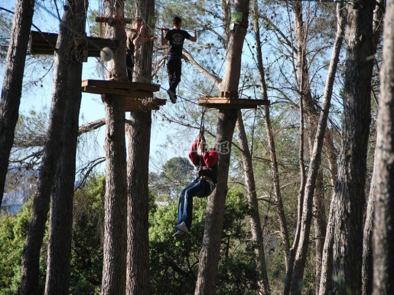 In the zip-lining treetop circuits