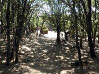Al lado del bosque