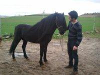 un caballo unico