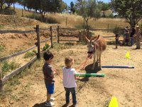 Playing with the donkey