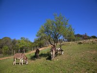 Donkeys in the field