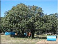 Árboles en nuestro campo