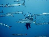 Filmando el banco de peces