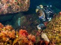 Fotografiando animales submarinos