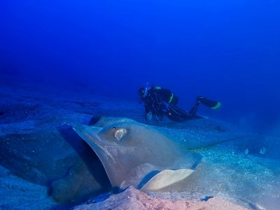 Guided scuba diving tour Radazul