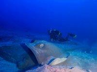 Inmersión de buceo guiada en Radazul