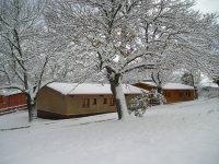 在树上冬季降雪后塔斯