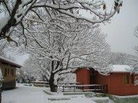 Admirando el arbol nevado