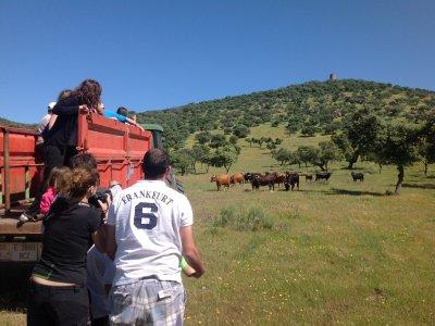 Groups Visit Livestock & Bullfighting, Talavera