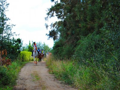 90 min horse ride tour in Cal da Loba +12
