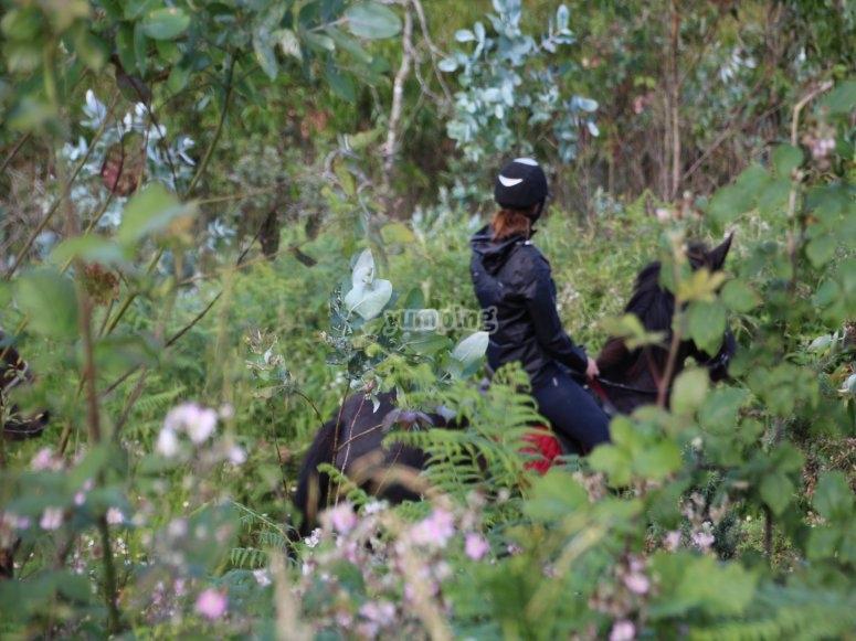 En el bosque a caballo