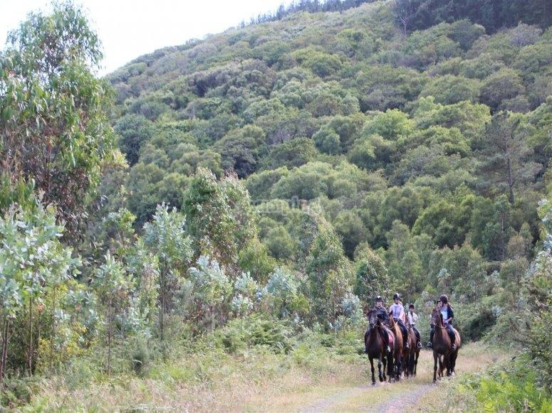 Sitting on horseback in the woods