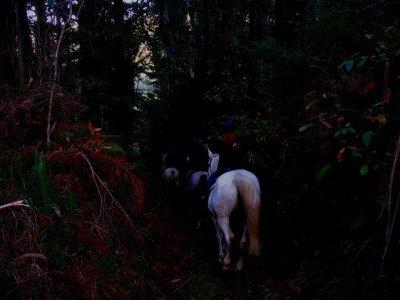 Ruta nocturna caballo Luar, cava y alojamiento