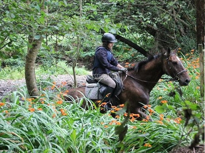 Among the bushes with the horses