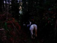 Night horse riding route
