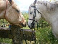 我们美丽的马匹